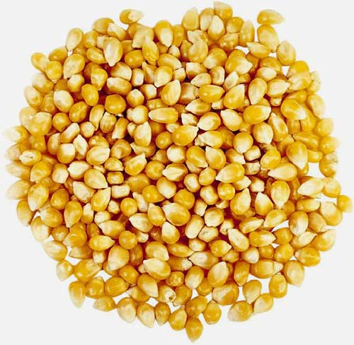 Cried corn filling for cornhole bags